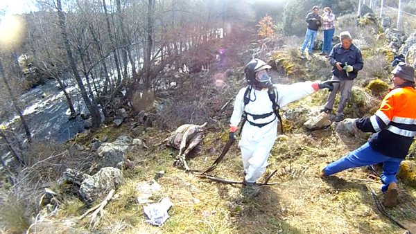 proteccion civil rescata una vaca del rio