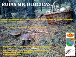 rutas micologicas guiadas 2014